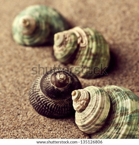 shells in the sand - stock photo