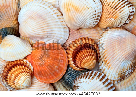 Shells of anadara and scallops. Natural background. - stock photo