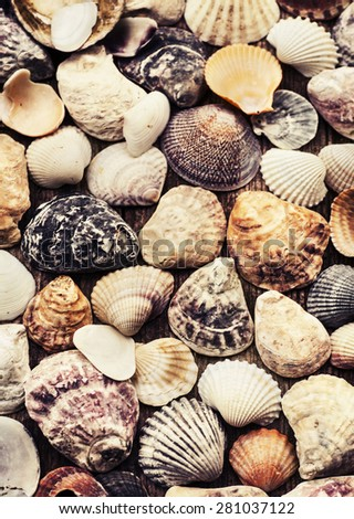 Shells of many types and sizes are found on our shelling beaches. - stock photo