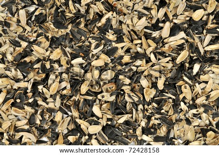 shells of sunflower seeds on a