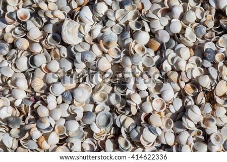 Shells on a beach near Falmouth. Tasmania, Australia - stock photo