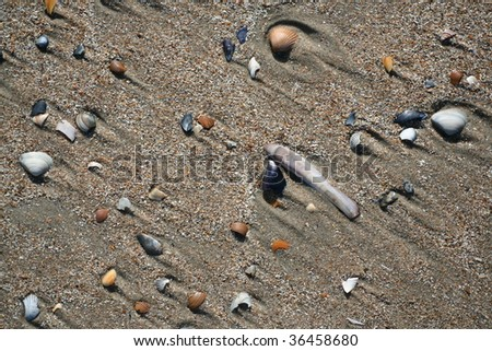 Shells on a sandy beach
