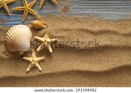 Shells on sand and planks - stock photo