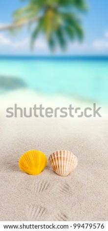 shells on sand beach - stock photo