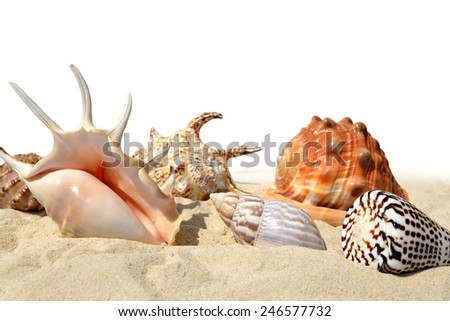 Shells on the sand isolated on white background - stock photo
