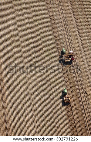 Shelly, Idaho, USA 3 Oct., 2014- An aerial view of farmers using farm machinery in the field to harvest potatoes.  The potatoes are dug by a potato combine, and taken to a cellar for winter storage.