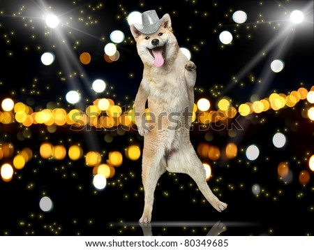 Shiba-inu dog in disco hat dance on her hind legs - stock photo