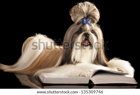 Shih Tzu  and book - stock photo