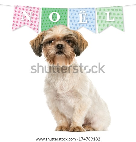 Shih tzu sitting, isolated on white with a christmas banner