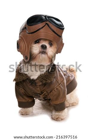 Shih tzu wearing a pilots costume studio cutout - stock photo