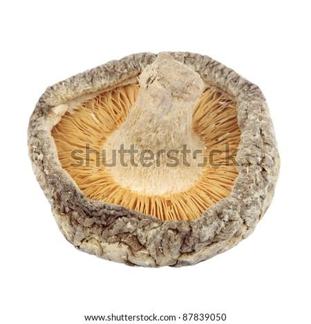 Shiitake Mushroom Cutout - stock photo