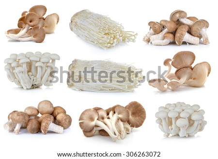 Shiitake mushroom , Enoki mushroom, White beech mushrooms, oyster mushroom on the White background - stock photo