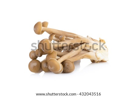 Shimeji mushrooms brown varieties, Hon Shimeji edible exotic mushrooms, Brown beech mushrooms, Shimeji mushroom, Edible mushroom isolated on white background - stock photo