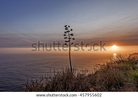 Shimmering blue, aquamarine sea and misty sky, the sun setting, in an array of pastoral colors, on a lone tree, along steep jagged cliffs of the Big Sur Coastline. Photographed near Carmel California. - stock photo