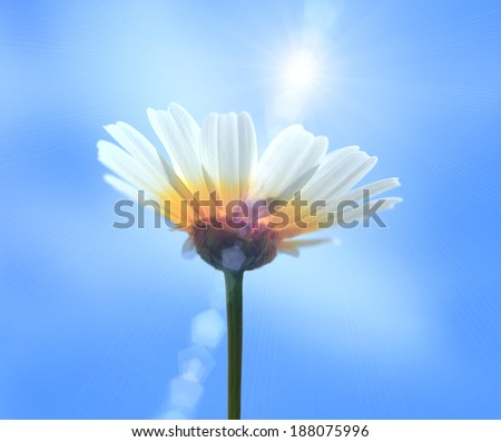 Shine flower - stock photo