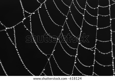shining spiderweb over black with dewdrops