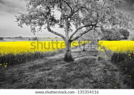 Black White With Color Accents Stock Images RoyaltyFree Images - Black and white photography with color accents