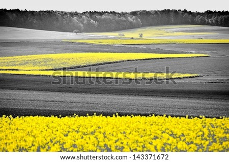 Shining yellow oilseed rape fields in a black and white landscape - stock photo