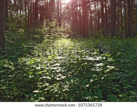stock-photo-shiny-foliage-at-thickets-of