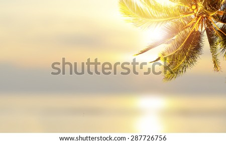 Shiny tropical landscape banner background. Coconut palm tree over blurry ocean.  - stock photo