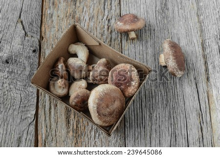 Shitake Mushroom on Wood Background - stock photo