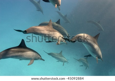 Shoal of dolphins swimming toward rays of sun - stock photo