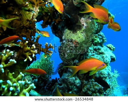 Shoal of fish - stock photo
