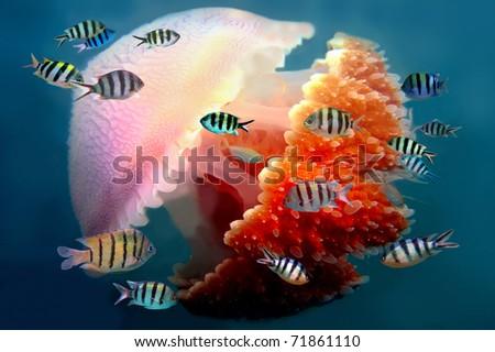 Shoal of fish and Mosaic jellyfish - stock photo