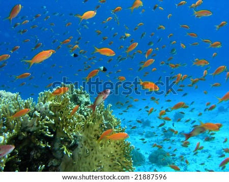Shoal of fish on the reef - stock photo