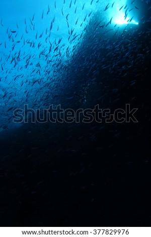 Shoal of fish underwater - stock photo