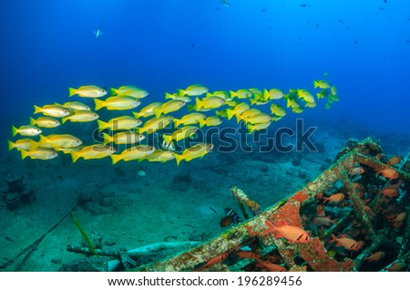 Shoal of yellow snapper and squirrelfish underwater - stock photo
