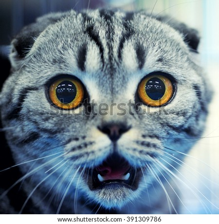 Shocked cat - stock photo