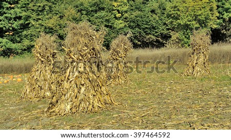 Shocks of  dry corn stalks and pumpkin on autumn field near forest