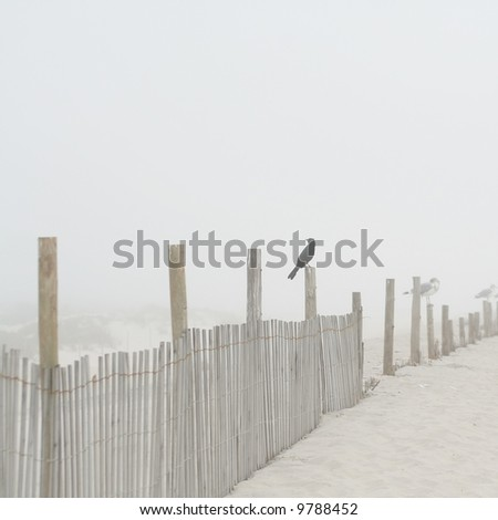 Shore Bird at the Beach on a Foggy Morning on a Fence Post