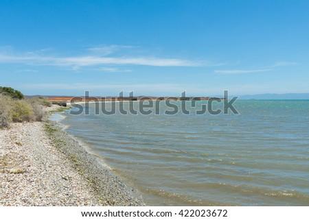 Shore full of empty seashells on a beach in Cubagua Island, in the Caribbean Sea. - stock photo