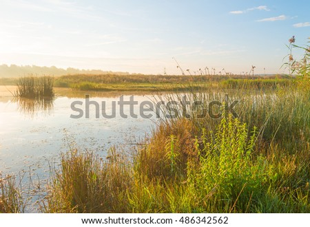 Shore of a lake at sunrise in summer