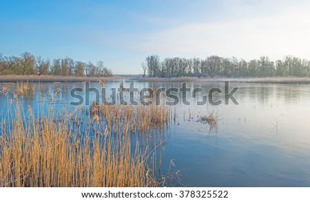 Shore of a lake in sunlight in winter