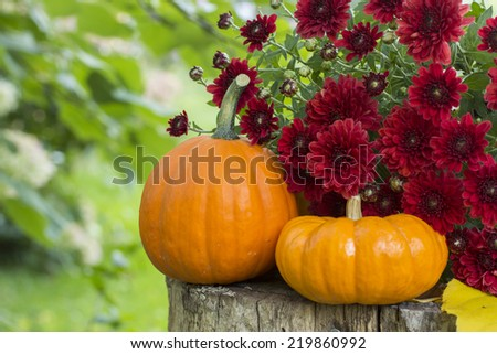 Short and tall mini pumpkins on wood stump with burgundy mums - stock photo