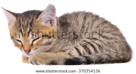 Short Hair brindle kitten sleep on a white background.