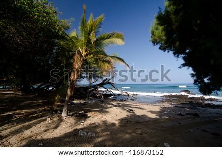 Short palm tree near entry to Puako Beach, Hawaii - stock photo