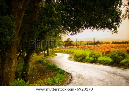 Shot of a country lane in the Alexander Valley of California.