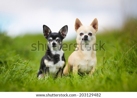 Shot of purebred dogs. Taken outside on a sunny summer day. - stock photo
