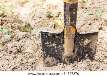 shovel in the ground. a vegetable garden - stock photo