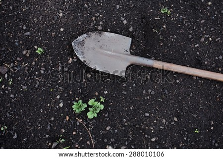 shovel on the ground, growing plants in the garden - stock photo