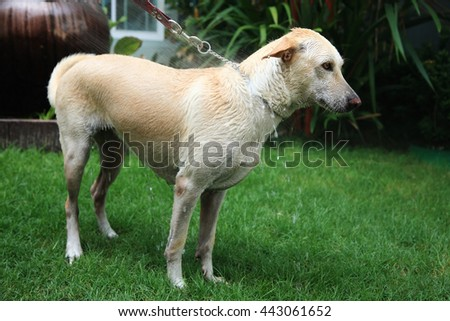 Showering adorable dog at the yard, Healthcare  lifestyle - stock photo