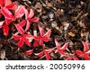 Shredded bark background with Virginia creeper leaves - stock photo