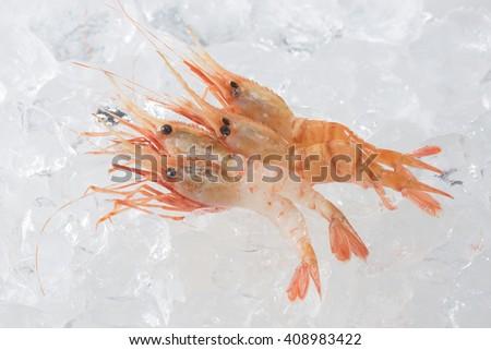 shrimp - stock photo