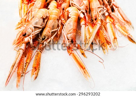 Shrimp cocktail background over white Ice on a market stall close up. Group of Unshelled tiger shrimps as gourmet seafood macro.