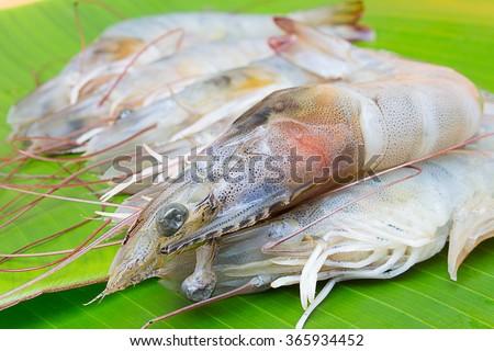 Shrimp on a banana leaf in Thailand market. - stock photo