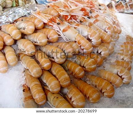 Shrimps in market - stock photo